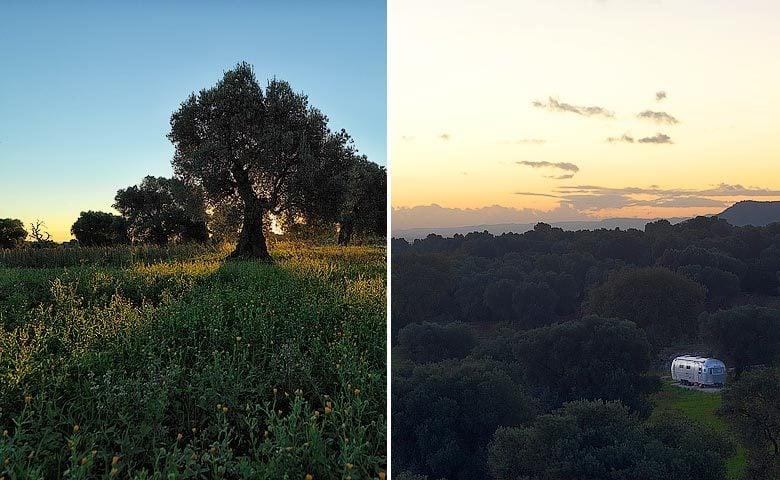 Masseria Petrarolo — Airstream and olive grove