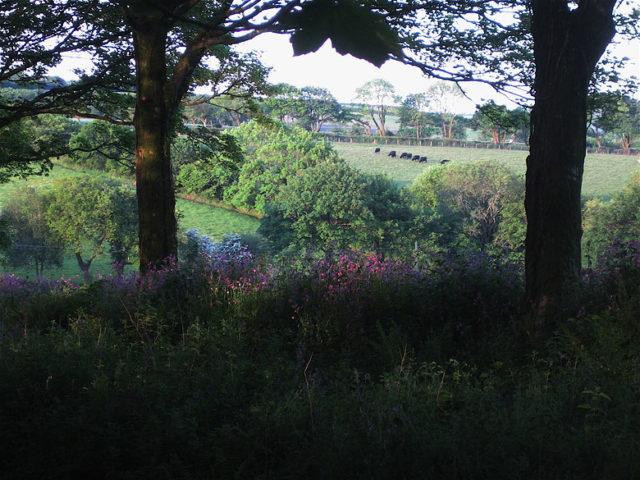 Botelet Cottages — Botelet farm
