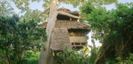 Chole Mjini, Chole Island, Mafia Island, Tanzania