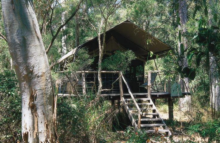 Paperbark Camp — Paperbark Camp Original Safari Tent