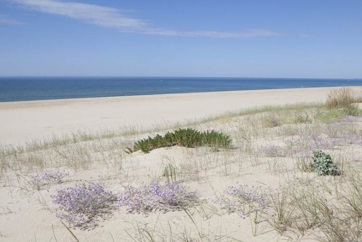 Companhia das Culturas — Praia Verde