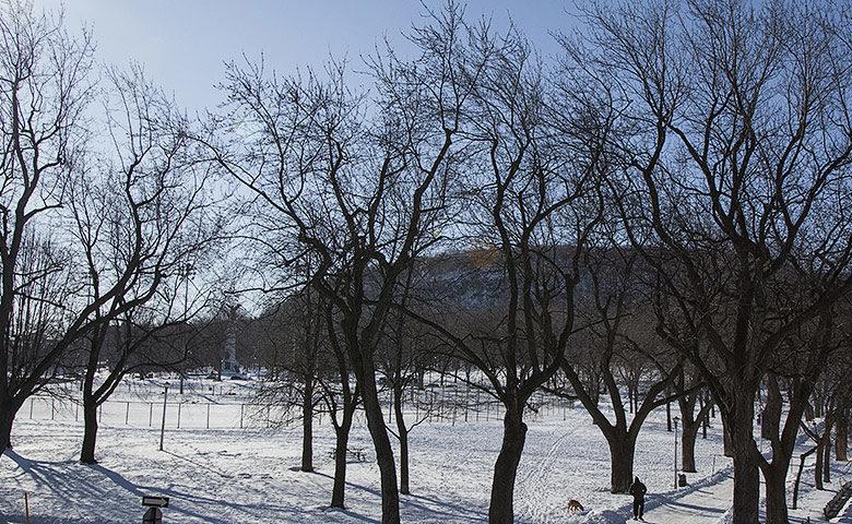 Casa Bianca — Mont-Royal park view
