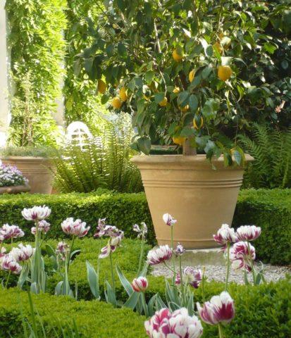 Hôtel Verhaegen — Garden