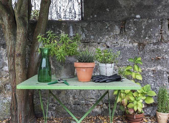 myhomeinporto — Garden